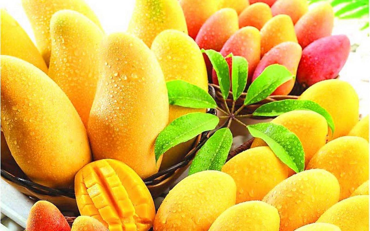 cara membuat keripik buah mangga